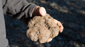 truffes noirs