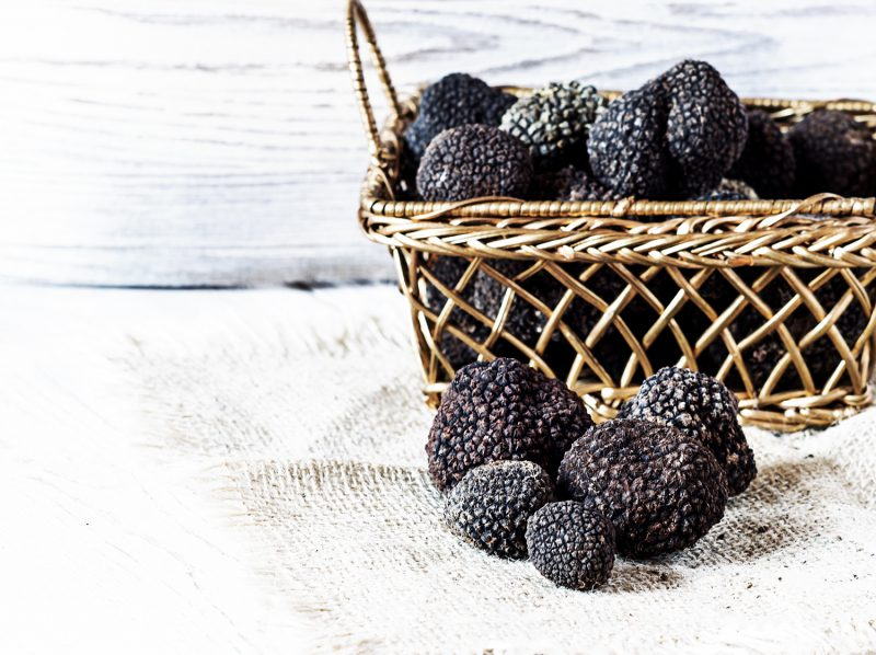 truffes noirs provence