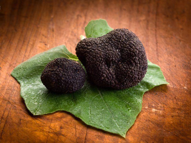 truffes noirs bio provence