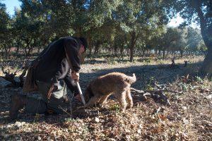 chien renifleur de truffes noirs provence bio