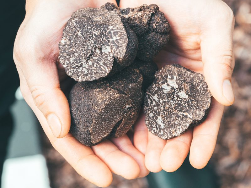 truffes noirs en direct du producteur