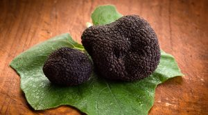 truffes noirs bio